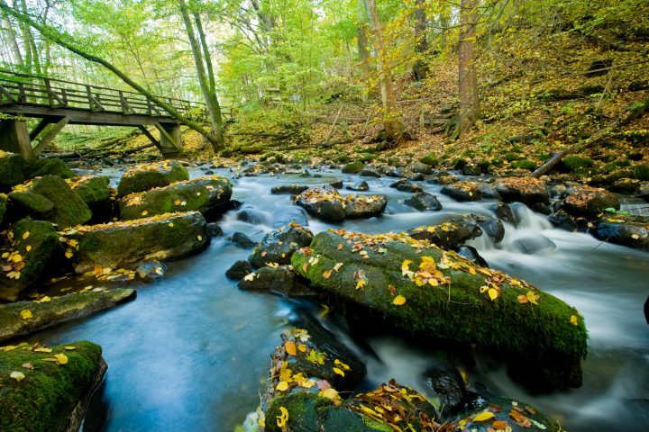 Westerwaldsteig-Herbst-Holzbachschlucht